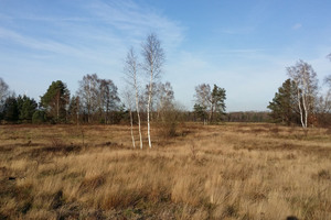 View over the open landscape of the DBU- natural heritage sites Wersener Heide
